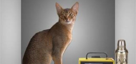 Schrödinger_cat