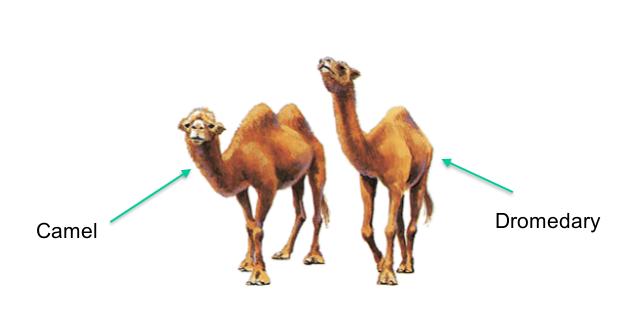 Gambar Unta berpunuk dua (camel) dan berpunuk satu (dromedary) yang akan dites oleh komputer dengan JST.